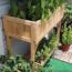 Tour of Jindy's balcony garden