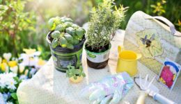 picking the right depth of containers for growing herbs