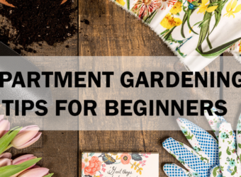 apartment gardening tips