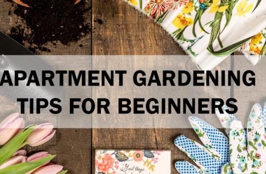 apartment gardening tips